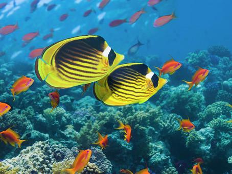 Saltwater Fish 5/30/19