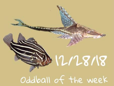ODDBALL OF THE WEEK 12/28/18
