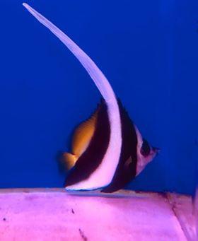 Saltwater Fish 4/30