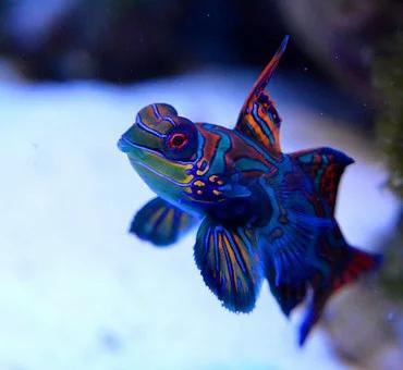 Saltwater Fish 4/27