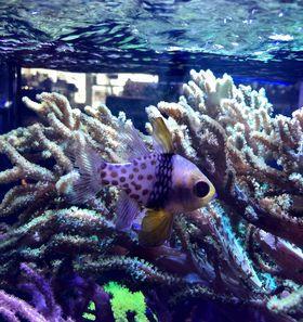 Saltwater Fish 11/21
