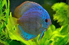 Freshwater Fish 12/11