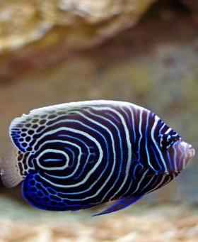 Saltwater Fish 12/18