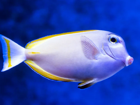 Saltwater Fish 6/18