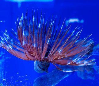 Saltwater Fish 8/29