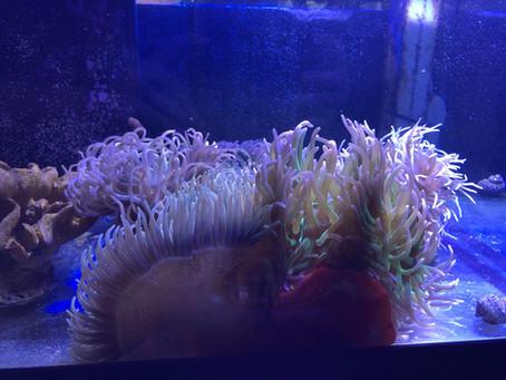 Saltwater Fish 10/24