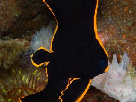 Saltwater Fish 3/25