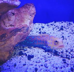 Saltwater Fish 4/23