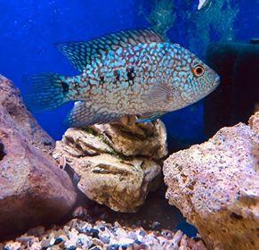 FRESHWATER FISH 12/19/19