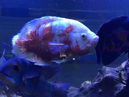Freshwater Fish 6/13/19