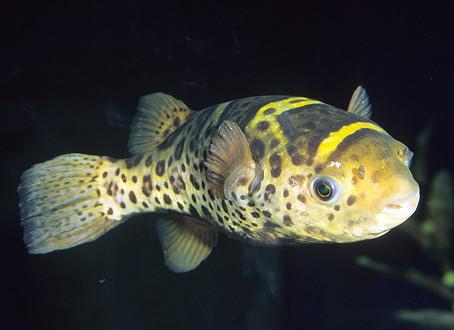 FRESHWATER FISH 4/15/19