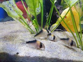 Freshwater Fish 6/18/19
