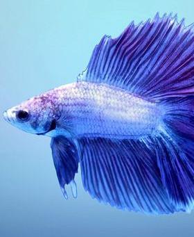 Freshwater Fish 11/27