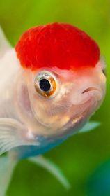 Freshwater Fish 12/18