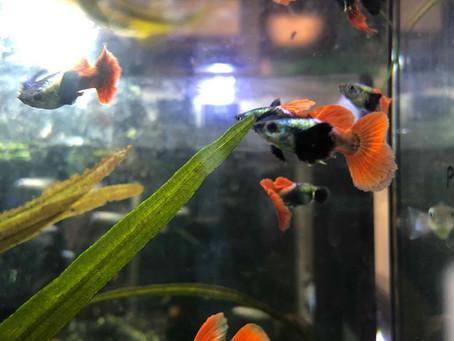 Freshwater Fish 7/8/19