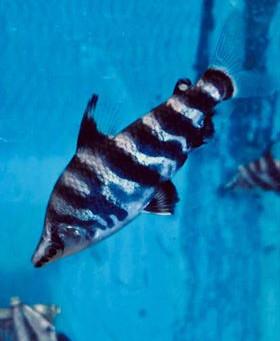 Freshwater Fish 7/31