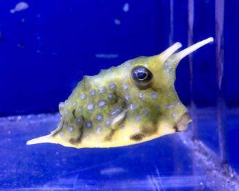 Saltwater Fish 12/11