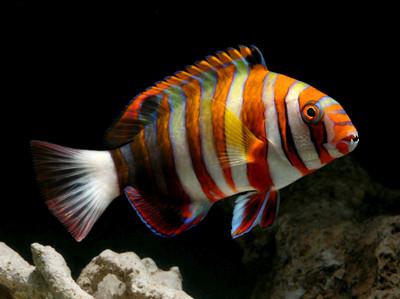 SALTWATER FISH 4/11/19
