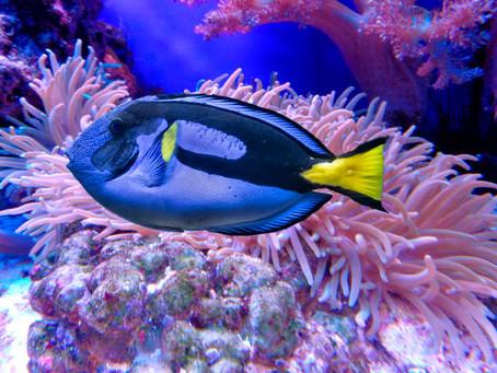 Saltwater Fish 5/21
