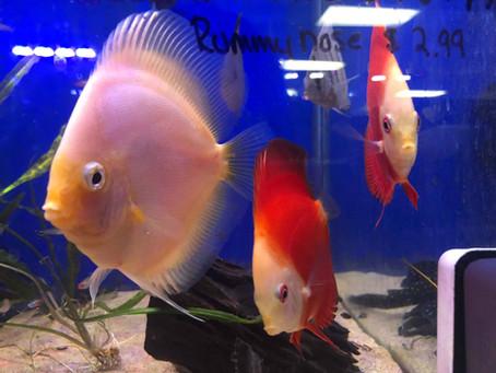 Freshwater Fish 7/29/19