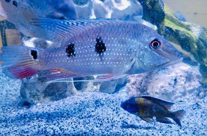 Freshwater Fish 8/7