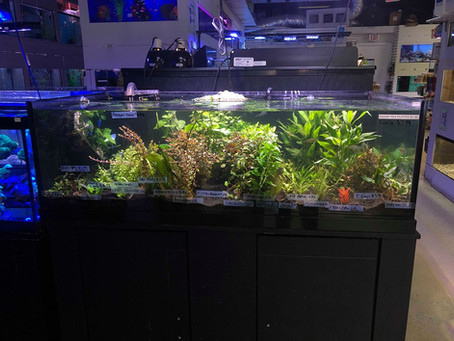 Freshwater Plants 6/10/19