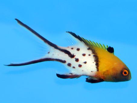 SALTWATER FISH 4/25/19
