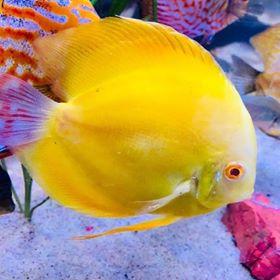 Freshwater Fish 5/1