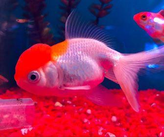 Freshwater Fish 5/27