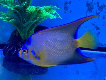 Saltwater Fish 11/6