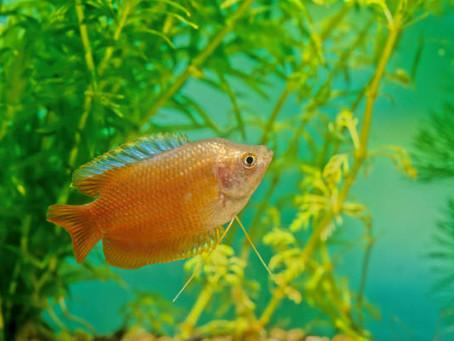 Freshwater Fish 5/28
