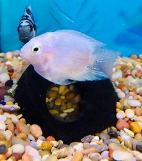 Freshwater Fish 4/23