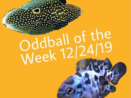 ODDBALL OF THE WEEK 1/24/19