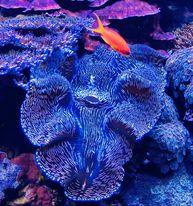 Saltwater Fish 12/26