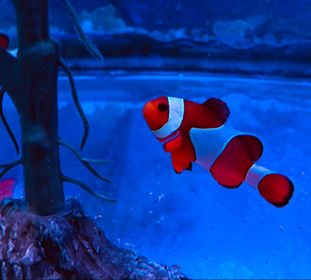 Saltwater Fish 5/12