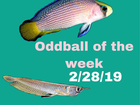 ODDBALL OF THE WEEK 2/28/19