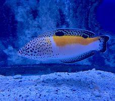 Saltwater Fish 2/6