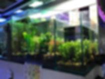 Original Plant Tank38738023_1904555489566445_64987214279637