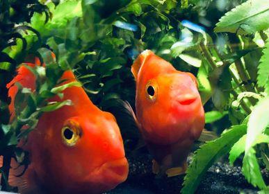 Freshwater Fish 11/6