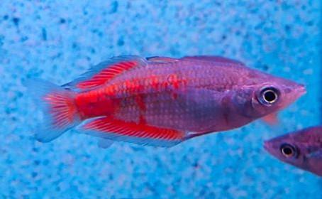 Freshwater Fish 5/6