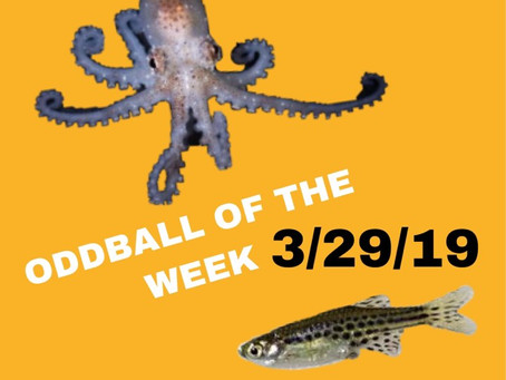 ODDBALL OF THE WEEK 3/29/19
