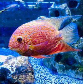 Freshwater Fish 6/4