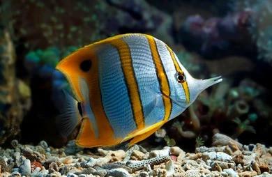 Saltwater Fish 5/28
