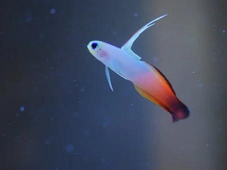 Saltwater Fish 5/4