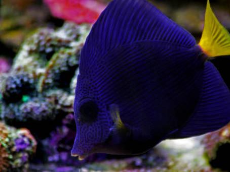 Saltwater Fish 1/14