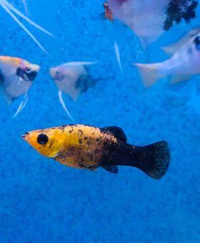 Freshwater Fish 8/29/20