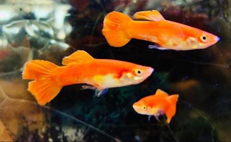 Freshwater Fish 6/25