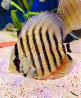 Freshwater Fish 6/12