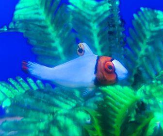 Saltwater Fish 8/7
