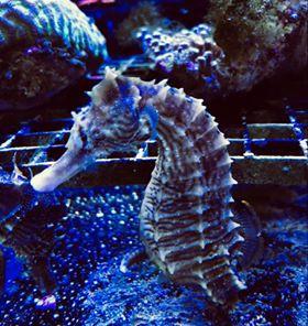 Saltwater Fish 7/3